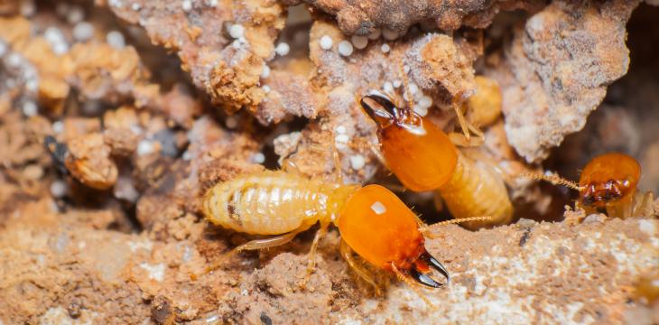 7 evidencias para saber si tienes termitas - Desinfestados