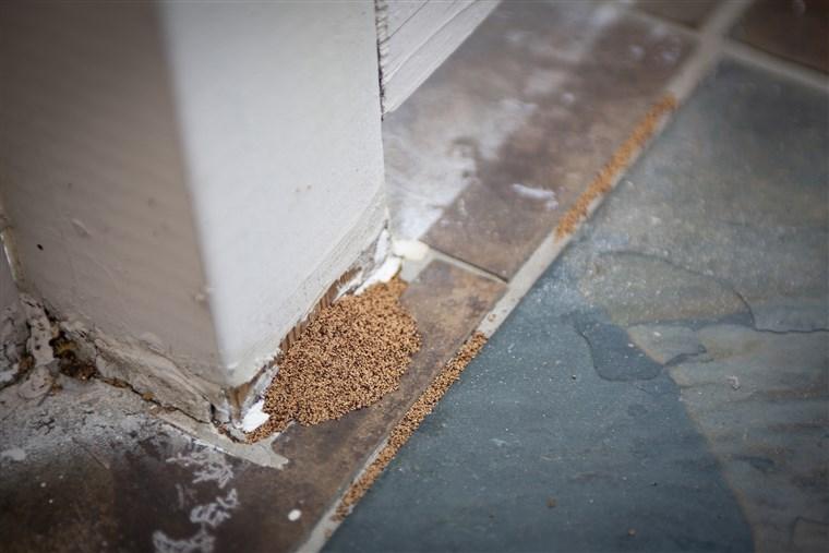 Resultado de imagen de signs of termites