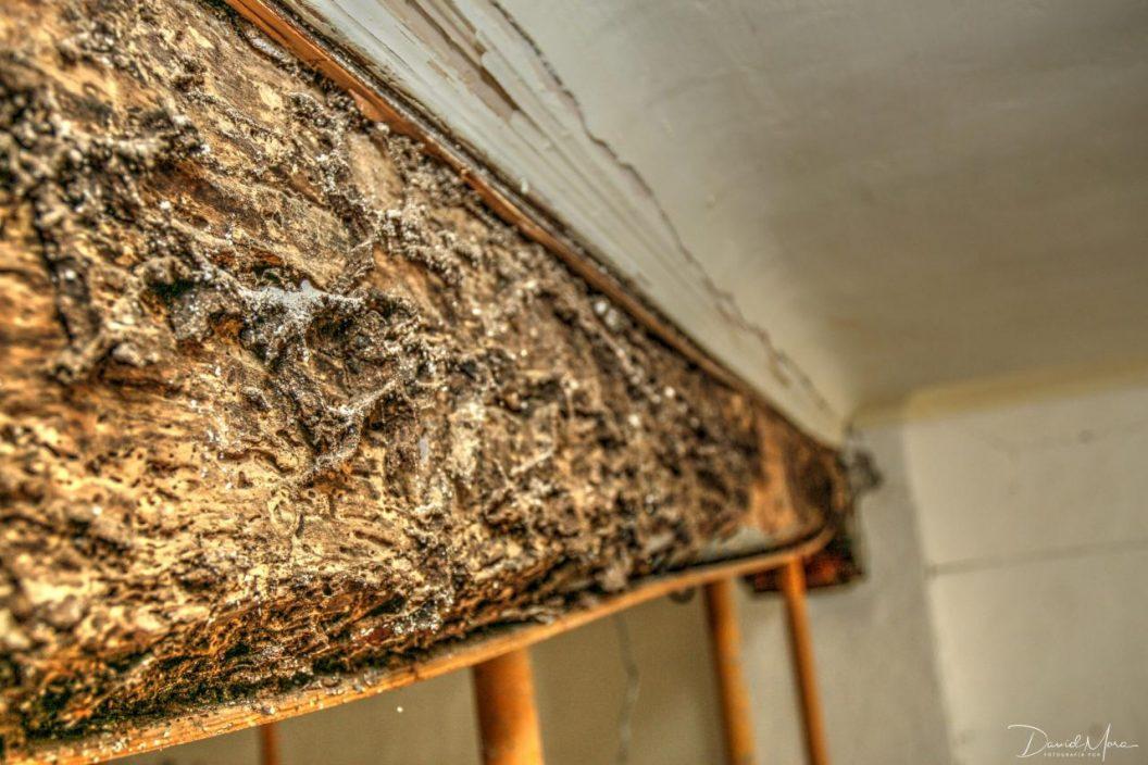 Daños por termitas » Pasión por las termitas
