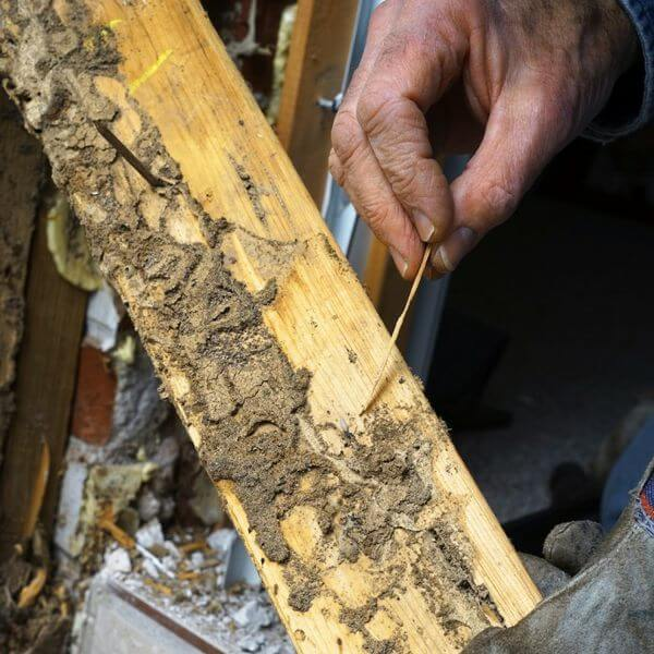 Termite and Moisture Inspections | Termite & Pest Control