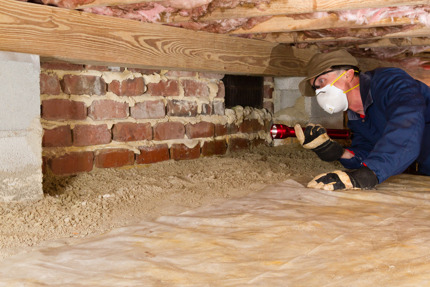 Need to Know Home Buyers and Sellers About Termite Inspections