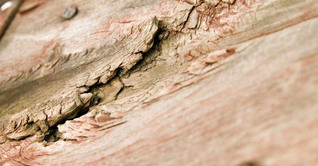 Resultado de imagen de podredumbre madera vigas