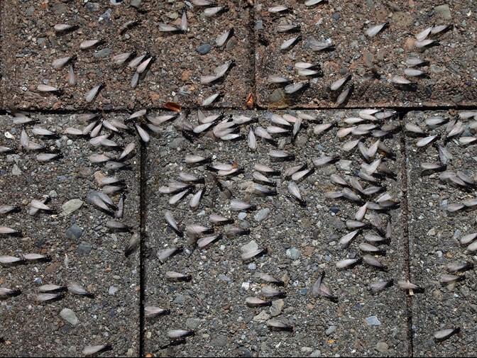 Resultado de imagen de termites signs