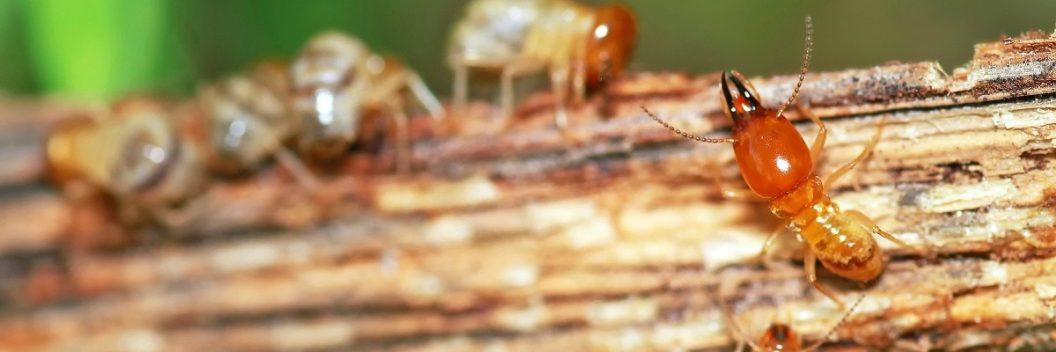 Resultado de imagen de termite control